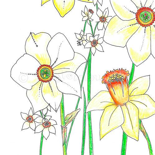 6 x Daffodils [382]