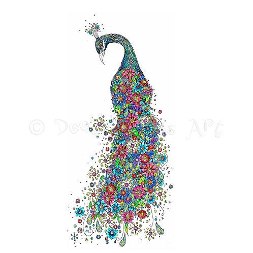 Peacock [021]