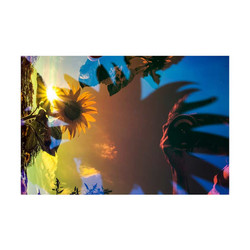 Sunflower-12