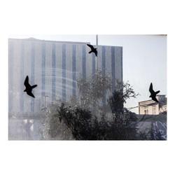 rome-birds