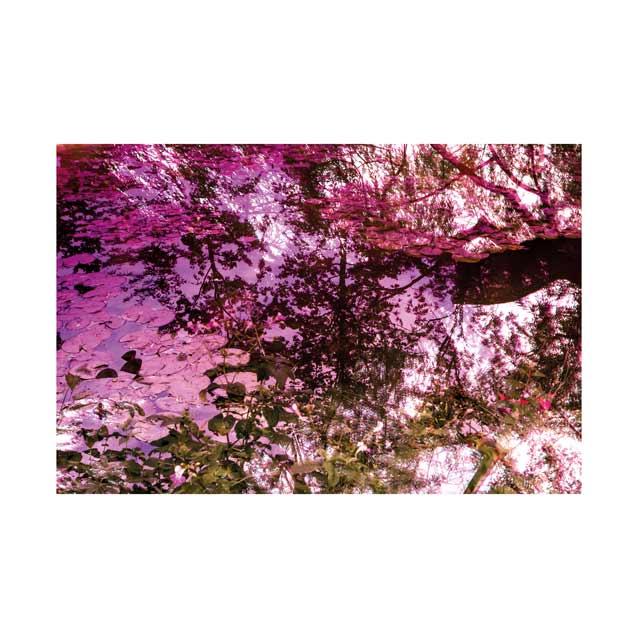 Monet-Waterlily