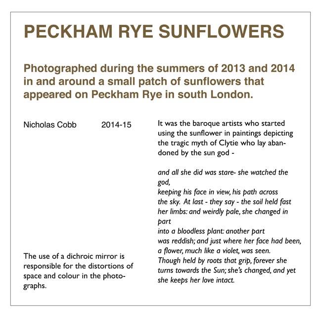 sunflowers Peckham Rye