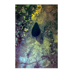 crow-puddle