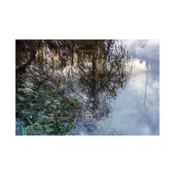 Monet's-Pond