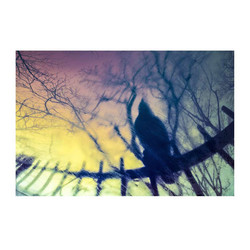 crow-rain
