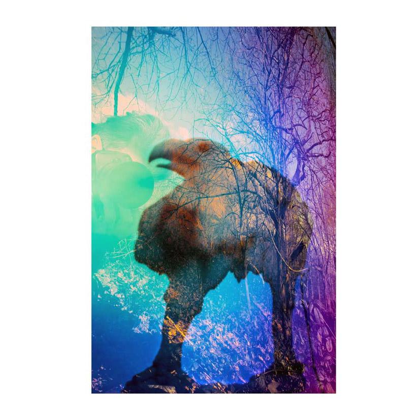 Tyranasaurus-crow