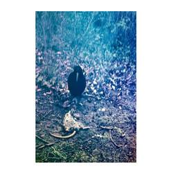 Crow-rat