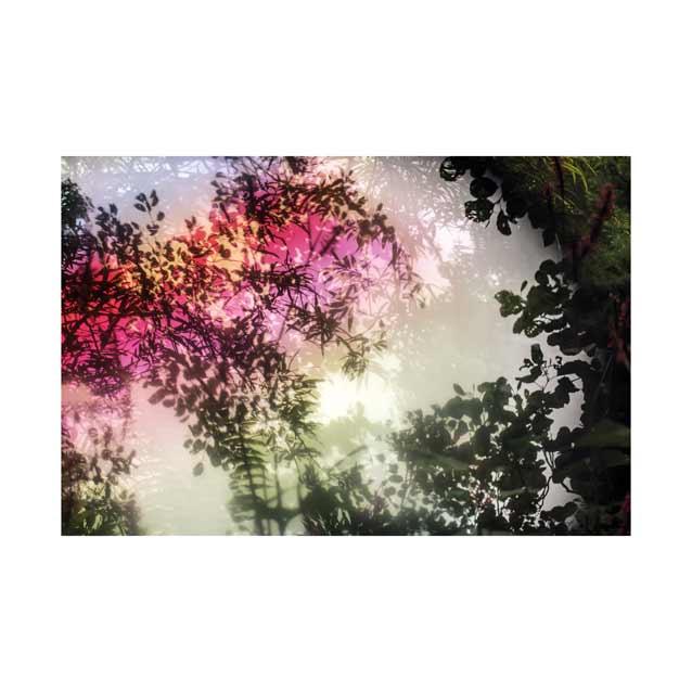 Monet's-Garden