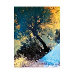 Tree-Provence