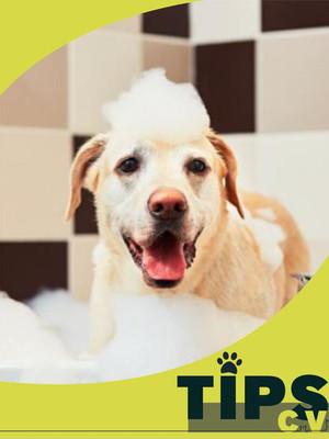 Periodicidad e importancia del baño de mi perro 🛁 🐕 ⚠️