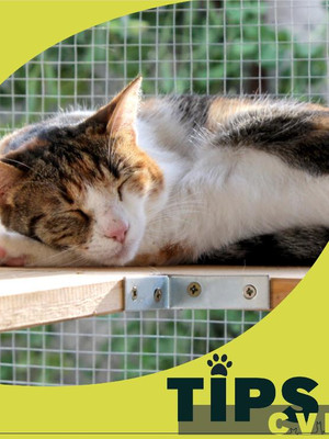 🌟¿Cómo evitar las caídas de los gatos? 🐱