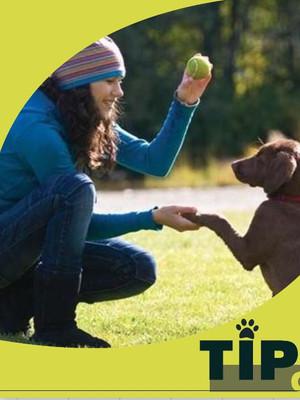 ¡Entrenando a mi perro! ¿Una tarea fácil? 🤔🐾🐶