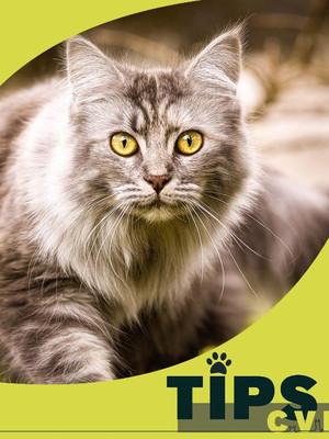 ¡Cuidados para el bienestar de tu Gato! 🐱🐅