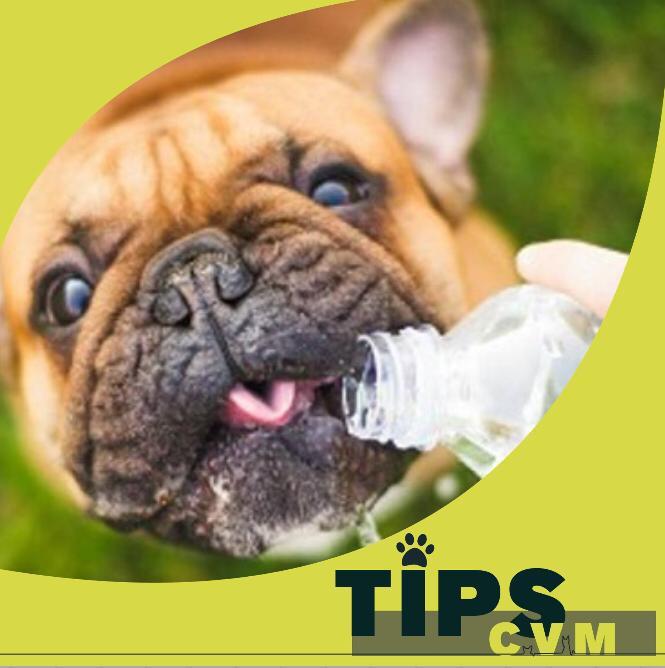 ¿Cómo evitar el temido golpe de calor en mi mascota?☀️