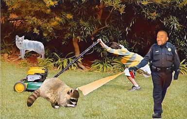 Raccoon_Coyote.jpg