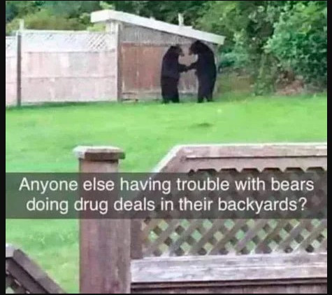 Luckily, the bears in my backyard just recite poetry.