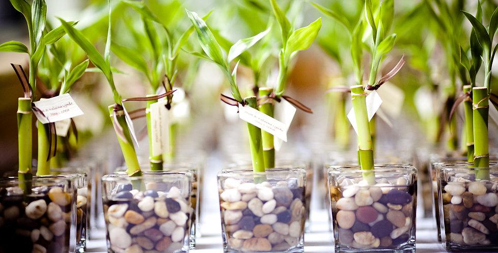 Mini bambuszok