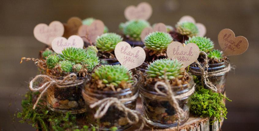 Kövirózsa vagy pozsgás növény mix üvegben