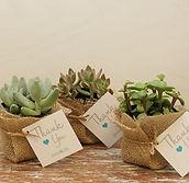 Köszönőajándék Növények