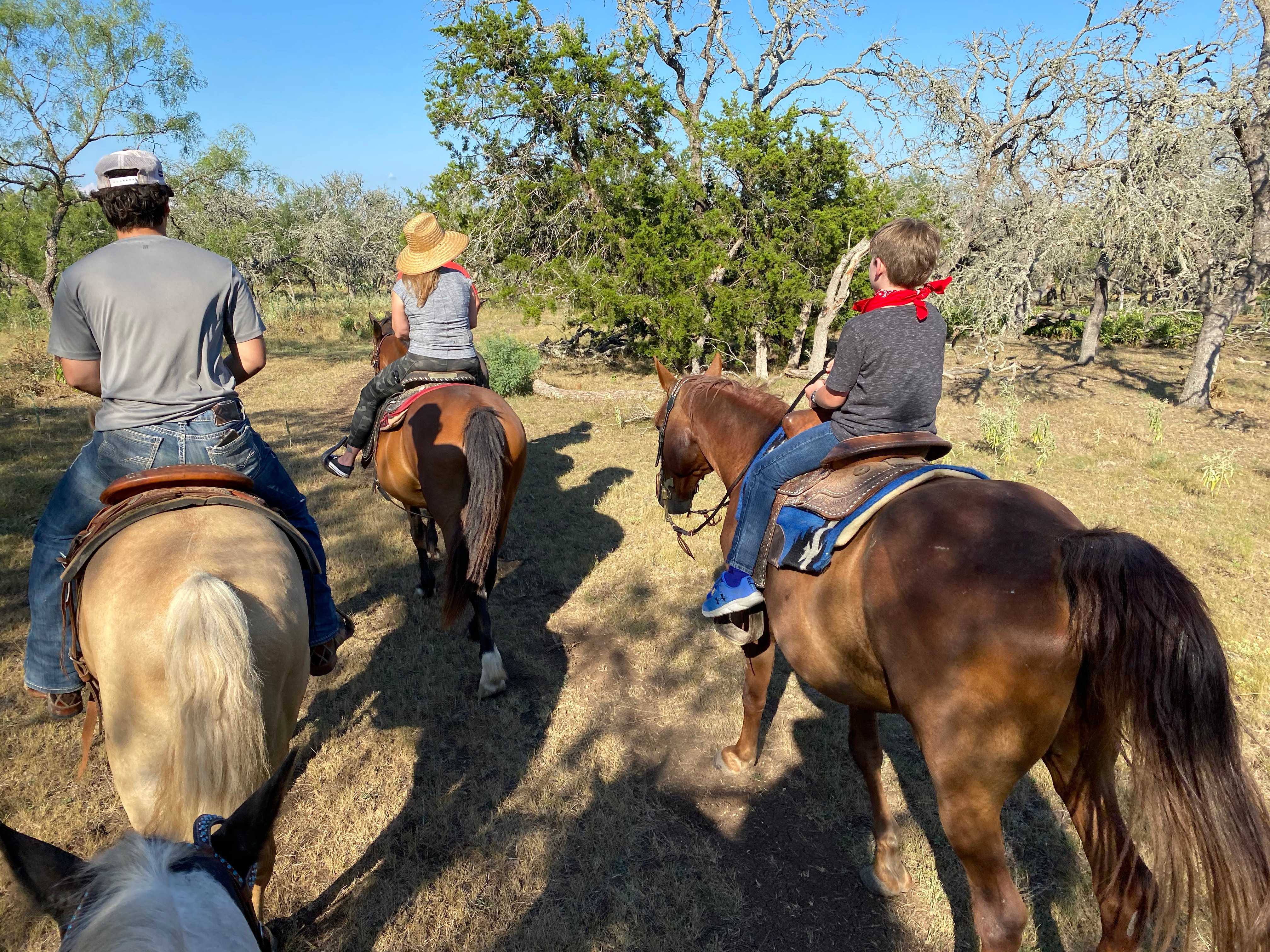Rescue Horse Experience