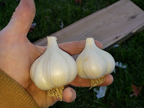 (Pre order) German Red Garlic (Naturally Grown) Seed Garlic