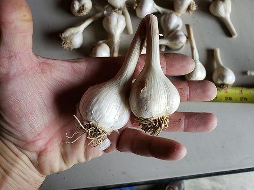 Music Garlic (Naturally Grown) Eating Garlic Culinary