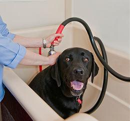 Dog getting Hydro Bath