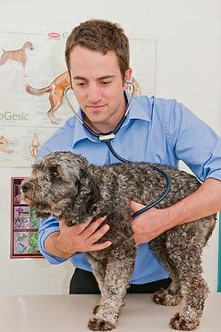 David Stasiuk Inspecting a Dog