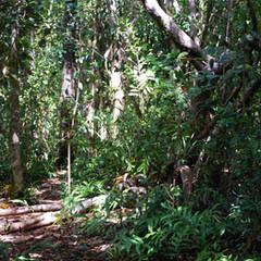 Merveilleuse randonnée dans la forêt dense et indigène.