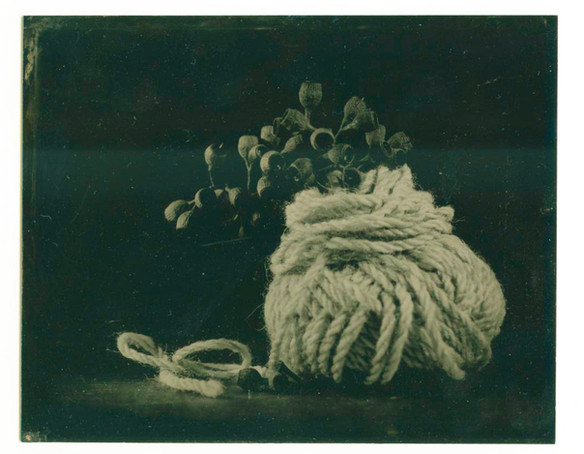 Gumnuts in wool.jpg
