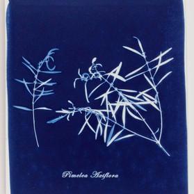 Pimelea Axiflora.jpg
