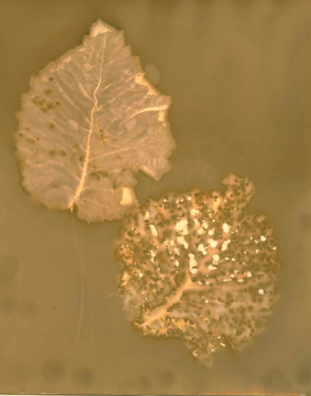 Lumen leaves 1.jpg