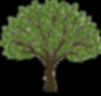 Celebration of Life Tree