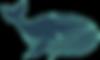 ballena ecocarib
