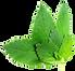 Herb-PNG-File-Download-Free.png