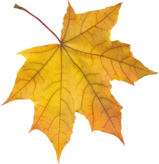 0fmxRf-autumn-leaves-amazing-image-download.png