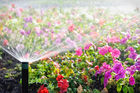 flowers-irrigation.jpg