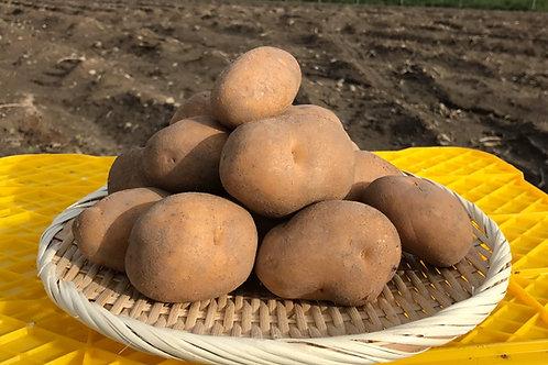 ジャガイモ インカのめざめ5kg