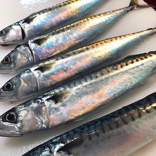 Mackerel Fillet Portion (180-200g)