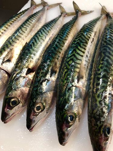 Butterflied Mackerel 250-300g (2 fish per portion