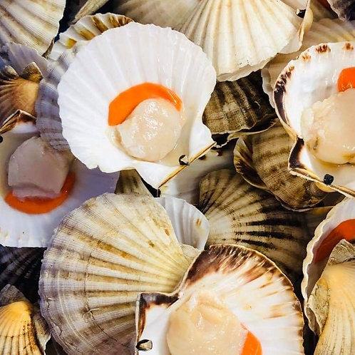 Half Shell Scallops x2