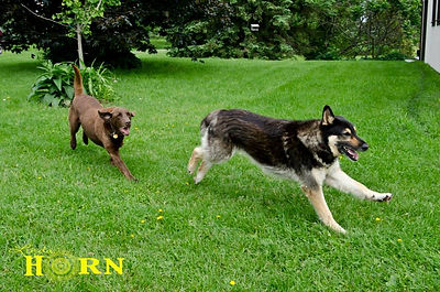 Dogs having fun while on vacation at The Kennel Club dog boarding