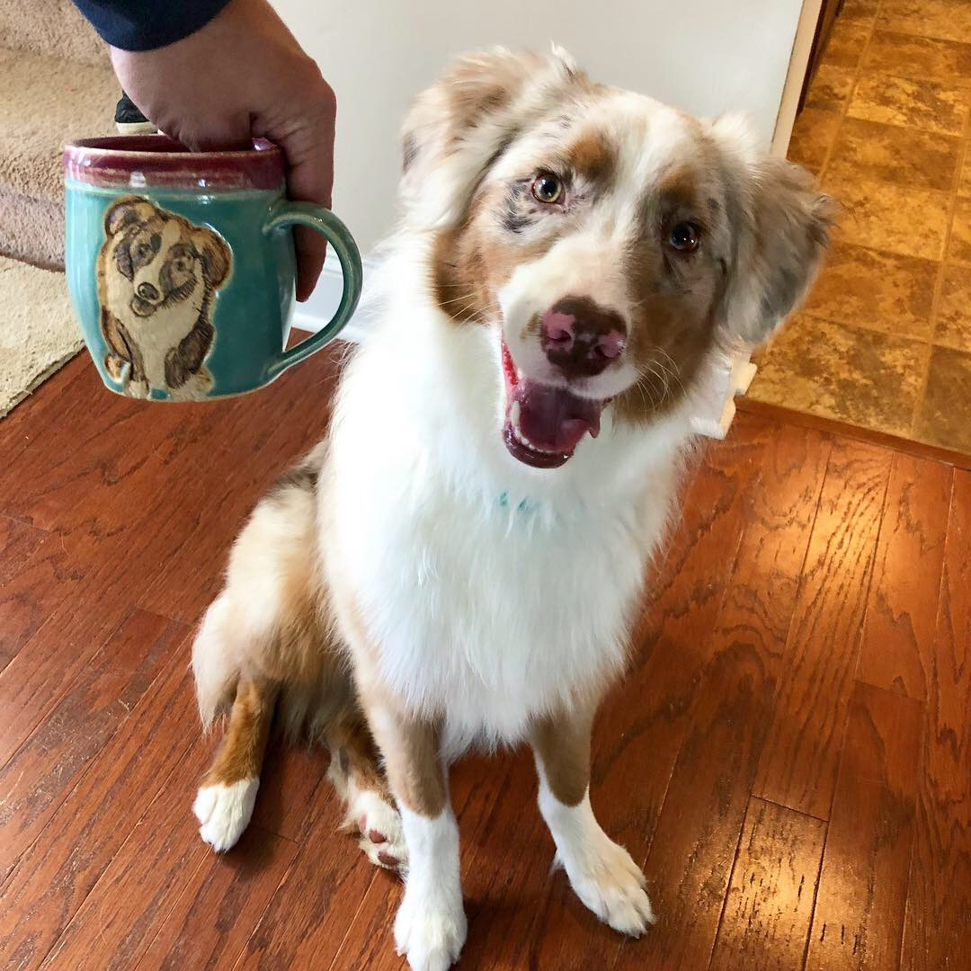 Australian Shepherd Pet Portrait Mug