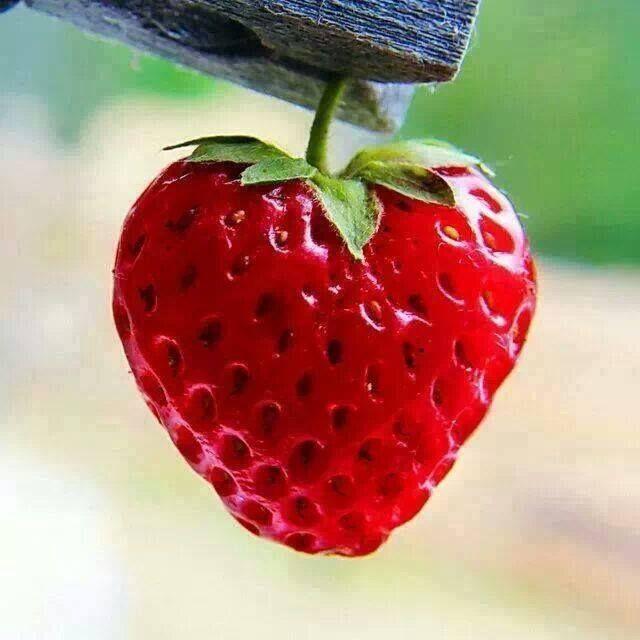 Erdbeeren in allen Variationen