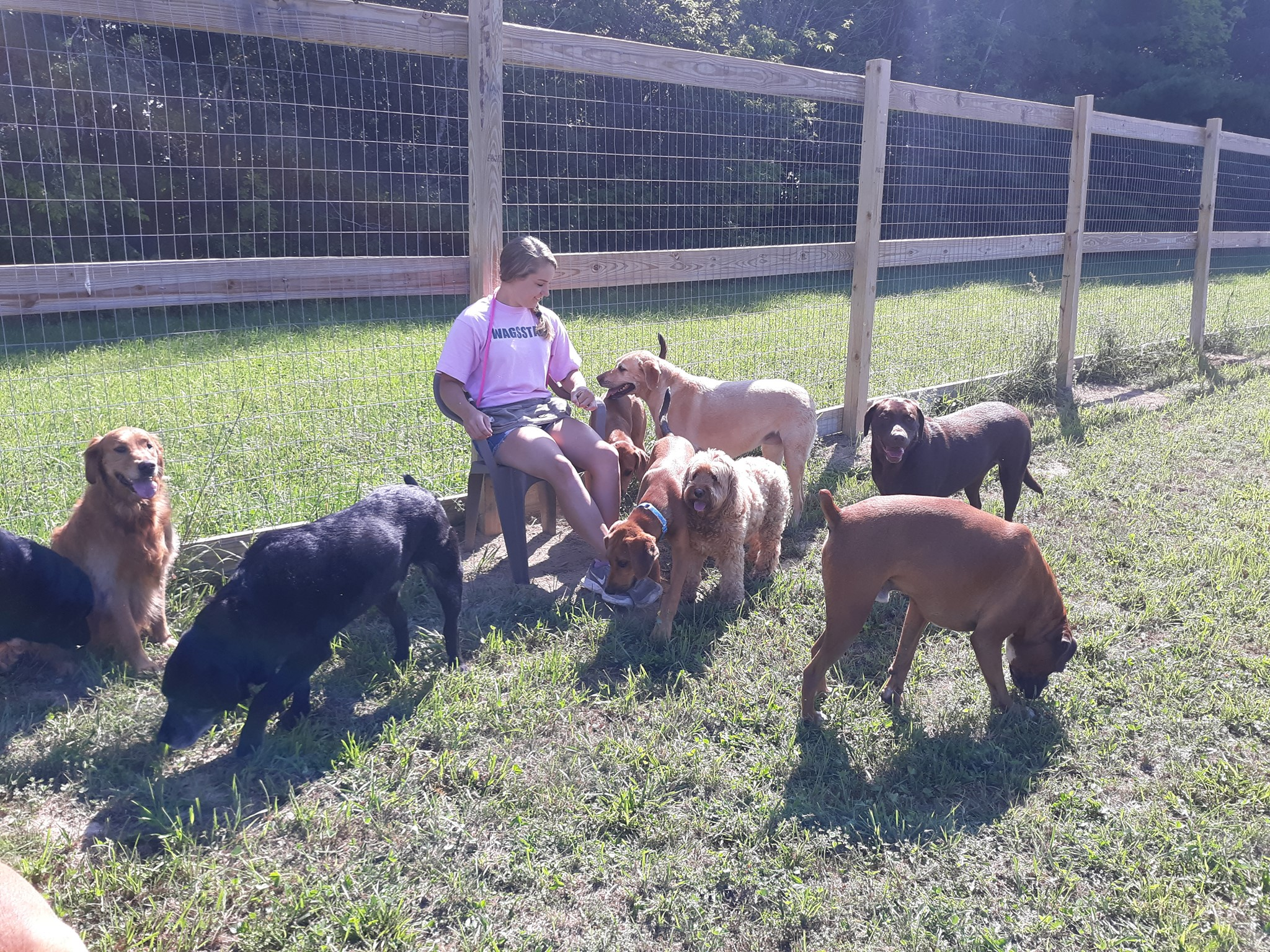 Wags Daycare for Dogs LLC Dog Daycare & Dog Boarding