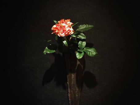 今日の迎え花