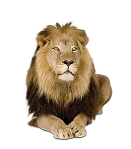 KING_LION_CROPPED_LOW_RES.png