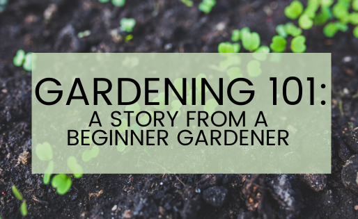 Gardening 101: the story from a beginner gardener
