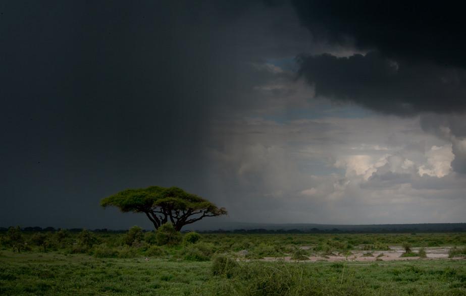 Safari Storm