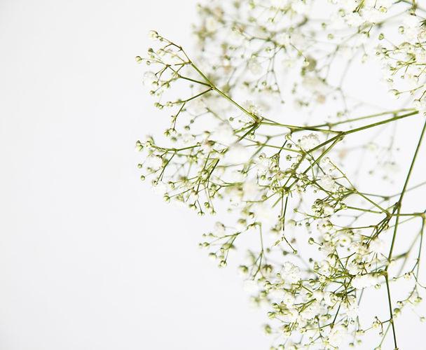 white-petaled-flowers-3040484_edited_edited_edited.jpg